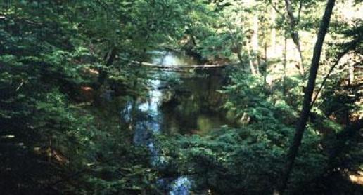 Brda i jej szlak kajakowy - zdjęcie