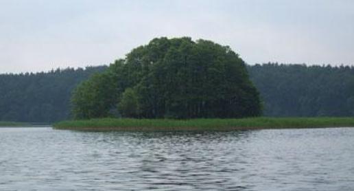 Fauna i flora w gminie Przechlewo (Bory Tucholskie) - zdjęcie