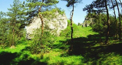 Grodzisko na Górze Słupsko koło Kostkowic w gminie Kroczyce - zdjęcie