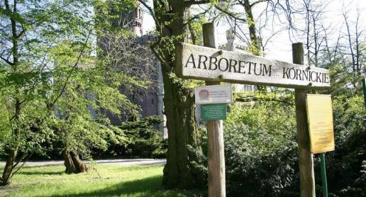 Arboretum w Kórniku - zdjęcie