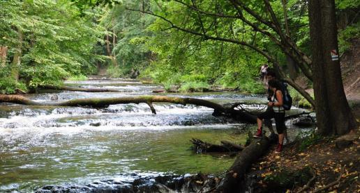 Rezerwat Nad Tanwią w gminie Susiec - zdjęcie