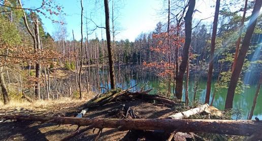 Na spacer do lasu? Ciekawe miejscówki województwa śląskiego - zdjęcie