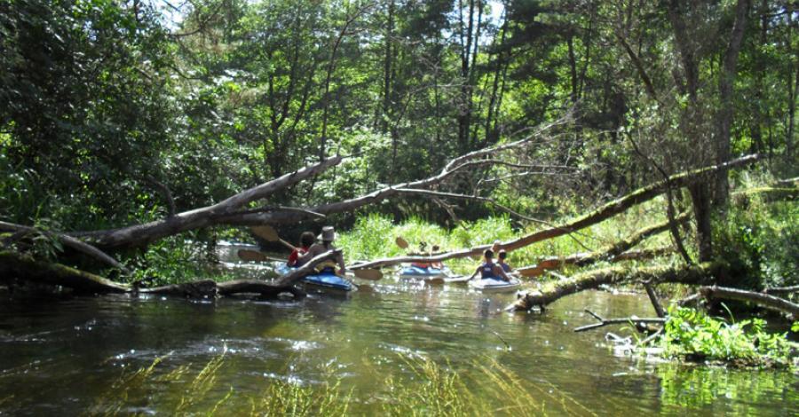 Spływ kajakowy Drawą - zdjęcie