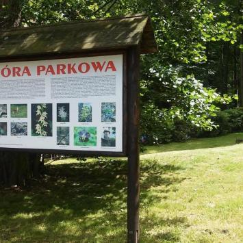Góra Parkowa w Głuchołazach