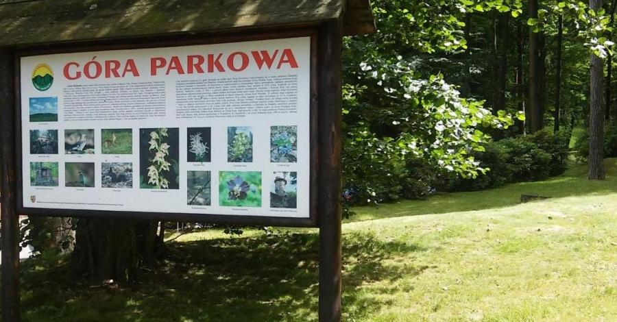 Góra Parkowa w Głuchołazach, mokunka