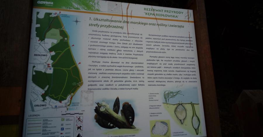 Rezerwat Kępa Redłowska w Gdyni - zdjęcie