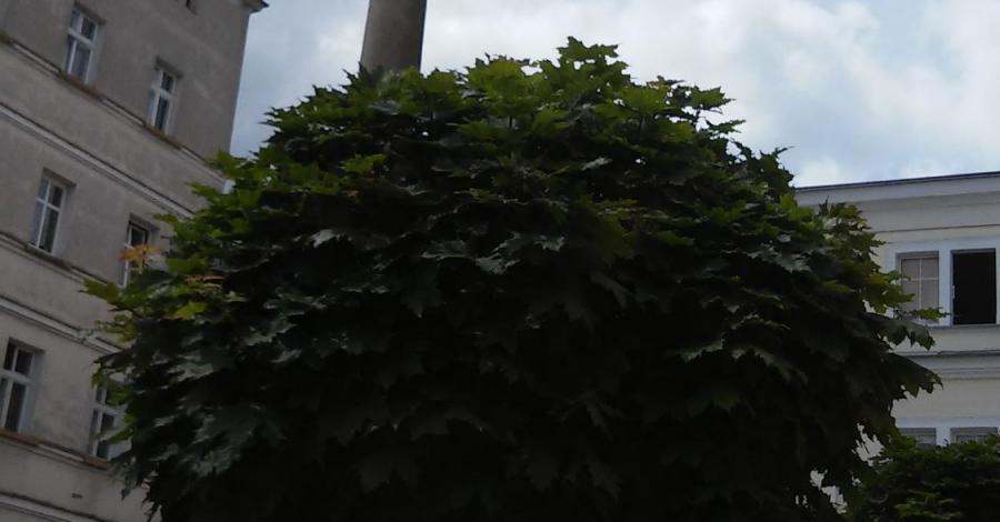 Kolumna Maryjna w Radkowie, mokunka