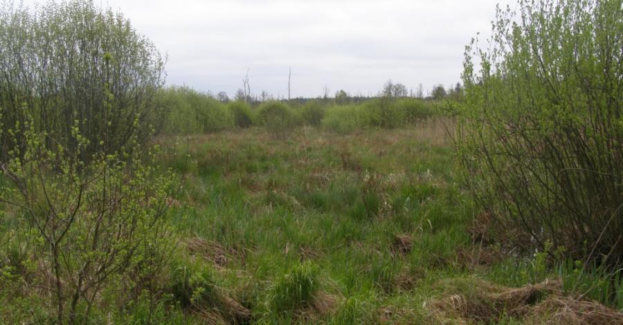 Bolimowski Park Krajobrazowy - zdjęcie