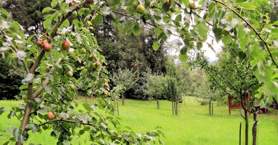 Sad leśny w Górach Stołowych - zdjęcie