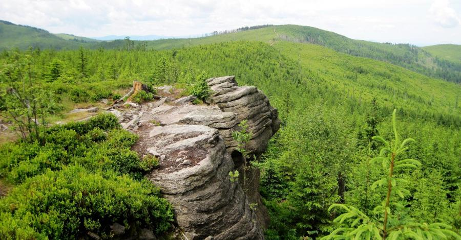 Magura Radziechowska w Beskidzie Śląskim - zdjęcie
