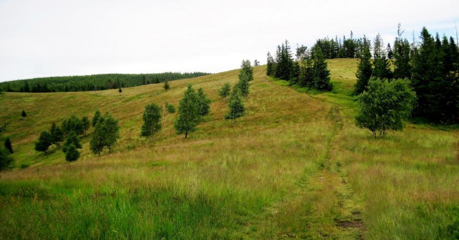 Hala Radziechowska w Beskidzie Śląskim - zdjęcie