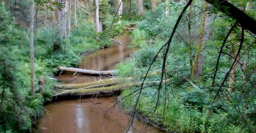 Rezerwat Szum na Roztoczu - zdjęcie