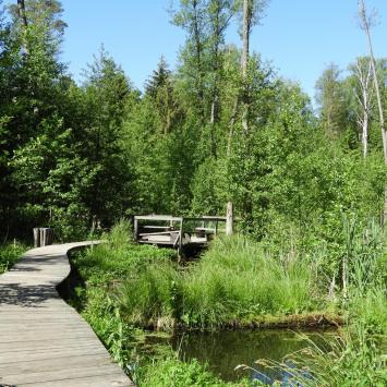 Rezerwat Krzemianka w Puszczy Knyszyńskiej