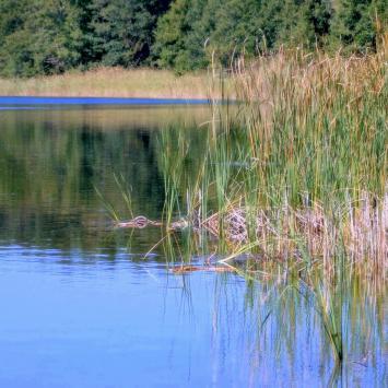 Jezioro Martwa Dziwna w Dziwnowie