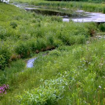 Ścieżka doliną rzeki Nepryszki w Józefowie Roztoczańskim