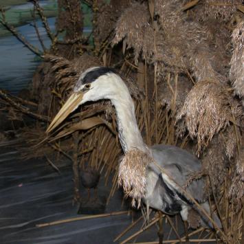 Muzeum Przyrodnicze w Kurowie