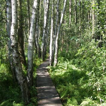 Ścieżka przyrodnicza Spławy w Poleskim Parku Narodowym