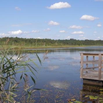 Jezioro Moszne w Poleskim Parku Narodowym