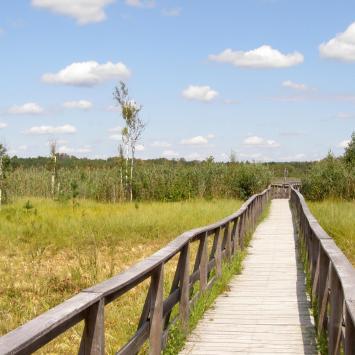 Ścieżka przyrodnicza Dąb Dominik w Poleskim Parku Narodowym