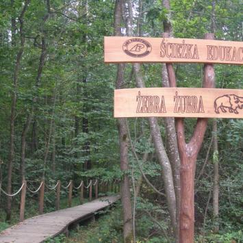 Ścieżka Żebra Żubra w Białowieży