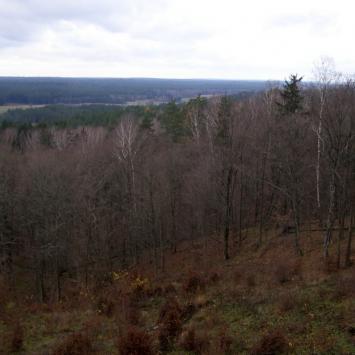 Wzgórza Świętojańskie w Puszczy Knyszyńskiej