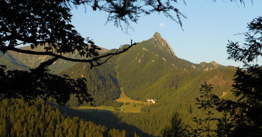 Boczań w Tatrach - zdjęcie