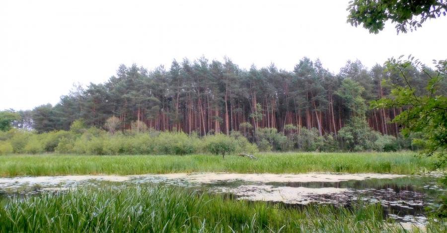 Wronia Woda w Załęczańskim Parku Krajobrazowym - zdjęcie