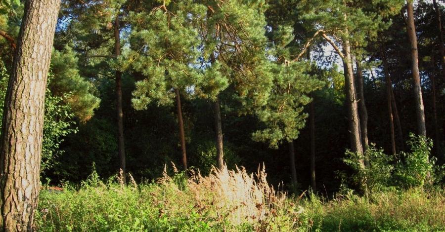 Góra Ossońska w Częstochowie - zdjęcie