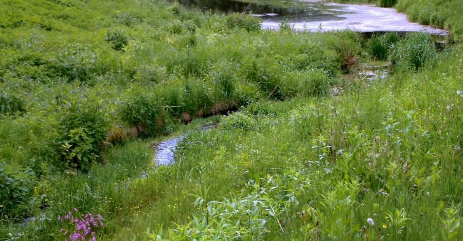 Ścieżka doliną rzeki Nepryszki w Józefowie Roztoczańskim - zdjęcie