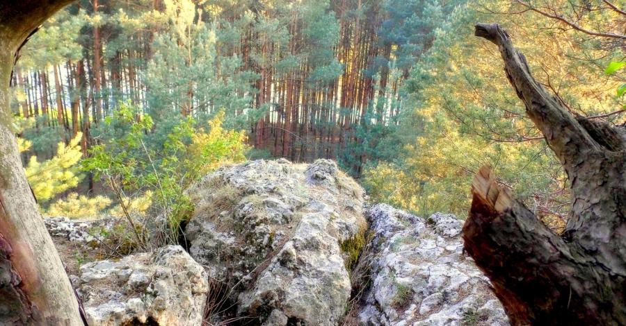 Góra Św. Genowefy w Załęczańskim Parku Krajobrazowym - zdjęcie