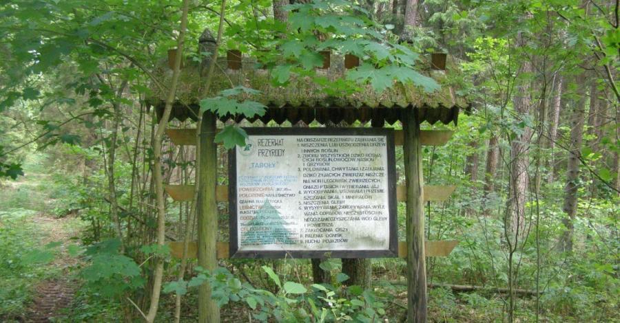 Rezerwat Taboły w Puszczy Knyszyńskiej - zdjęcie