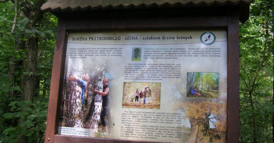 Ścieżka Szlakiem Drzew Leśnych w Białymstoku - zdjęcie
