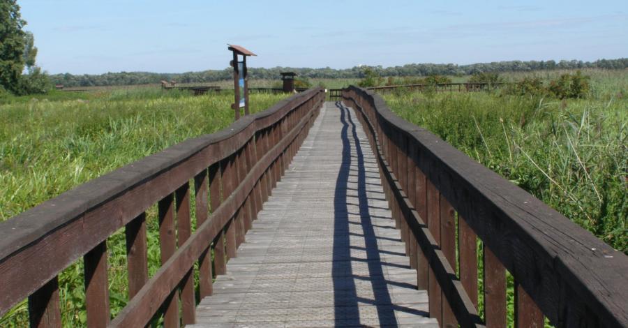 Ścieżka przyrodnicza Kładka Wśród Bagien w Kurowie - zdjęcie