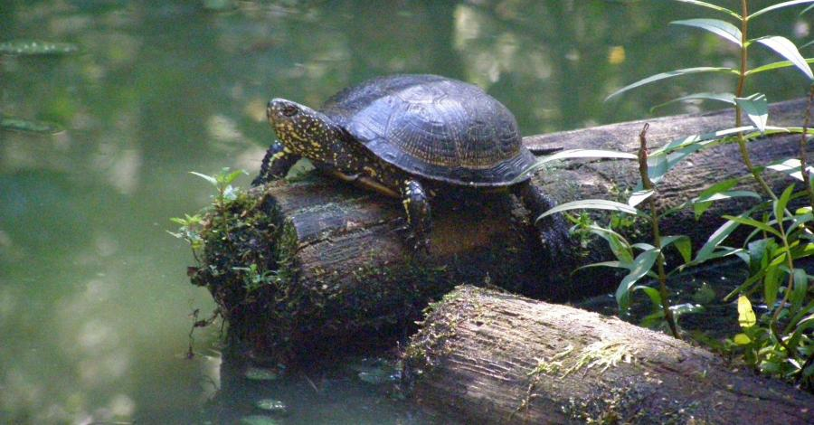 Ścieżka Żółwik w Starym Załuczu - zdjęcie