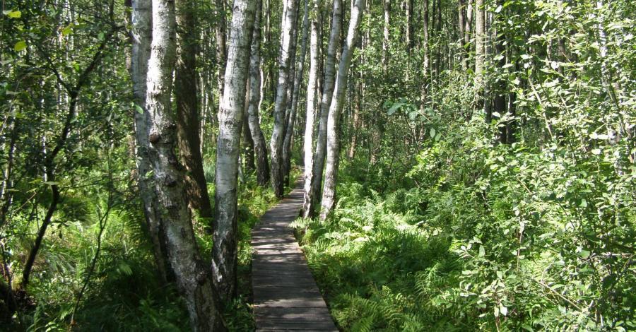 Ścieżka przyrodnicza Spławy w Poleskim Parku Narodowym - zdjęcie