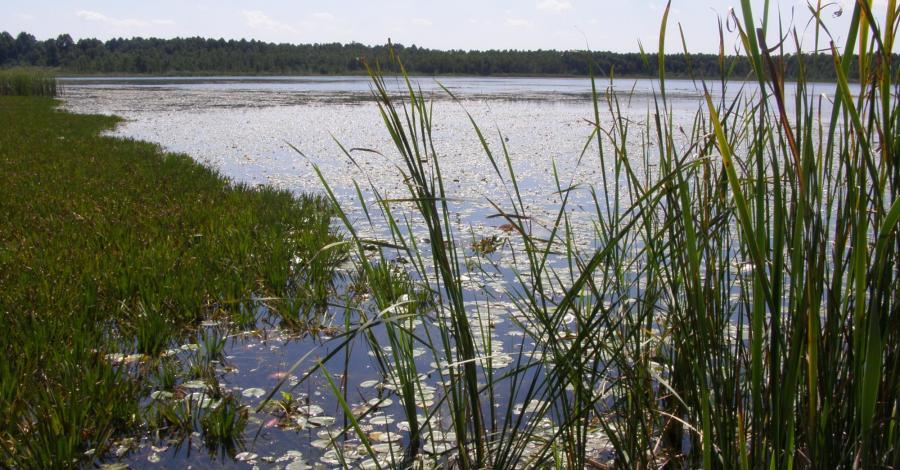 Jezioro Łukie w Poleskim Parku Narodowym - zdjęcie