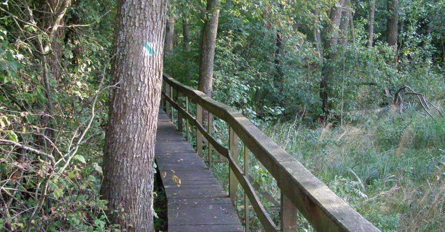 Ścieżka Obóz powstańczy w Poleskim Parku Narodowym - zdjęcie