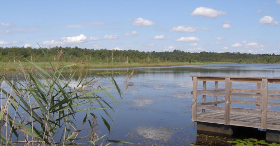 Jezioro Moszne w Poleskim Parku Narodowym - zdjęcie