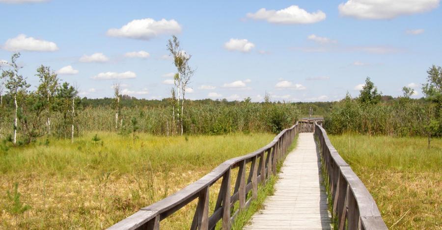Ścieżka przyrodnicza Dąb Dominik w Poleskim Parku Narodowym - zdjęcie