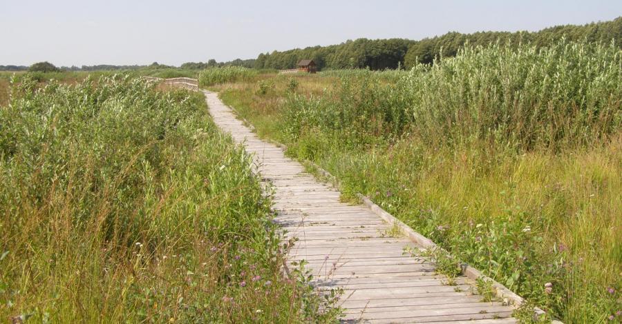 Ścieżka przyrodnicza Czahary w Poleskim Parku Narodowym - zdjęcie
