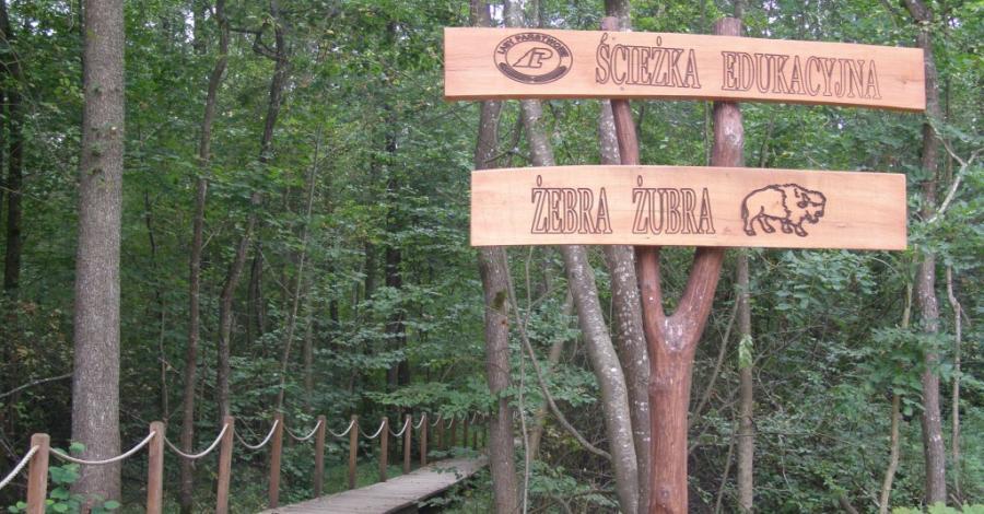 Ścieżka Żebra Żubra w Białowieży - zdjęcie