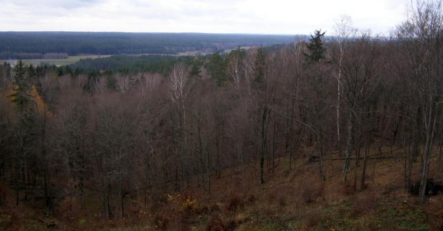 Wzgórza Świętojańskie w Puszczy Knyszyńskiej - zdjęcie