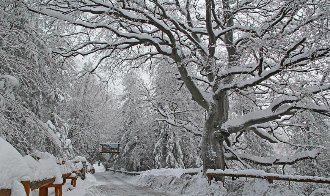 Zimą bywa wręcz bajkowo...