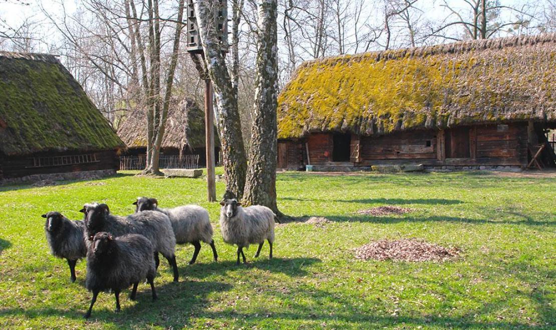 Sielsko i anielsko w Muzeum Wsi Opolskiej, które można zwiedzać z czworonogami