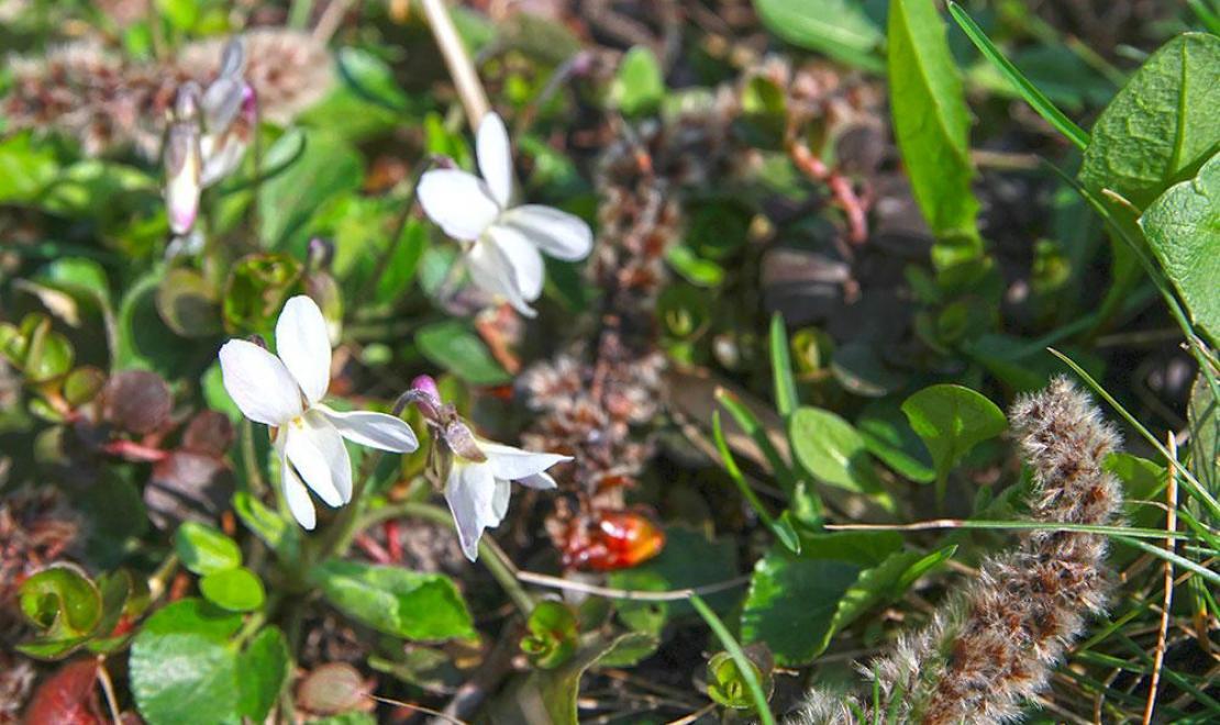 Pierwsze kwiaty przeglądają się w słońcu