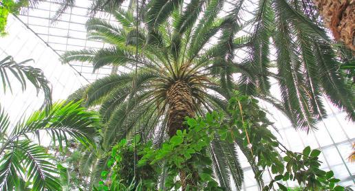 Palmiarnia w Gliwicach na każdą pogodę i święto - zdjęcie