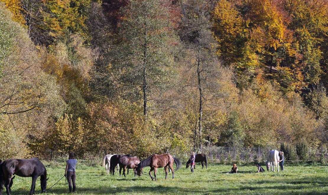Wypas koni pod Sokolicą
