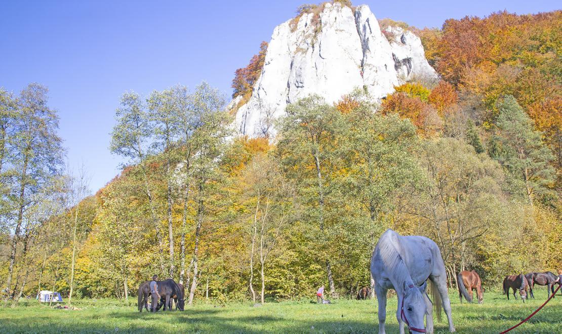 Jesienna Jura