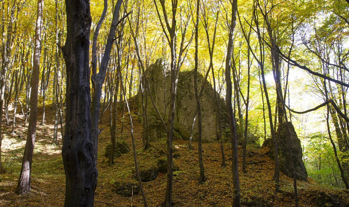 Jura jesienna