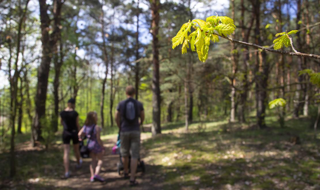 Leśna ścieżka dookoła Siewierza